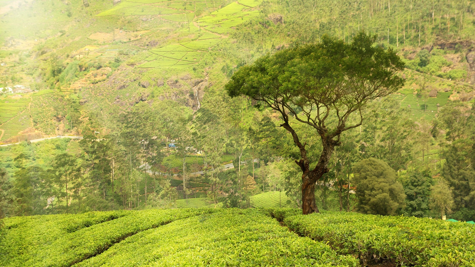 Top 16 Best Places to Visit in Munnar in 2019 (Map & Photos