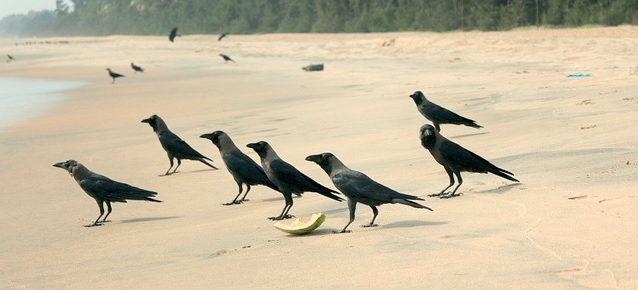 Best Beaches near Trivandrum