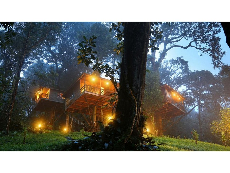 nature-zone-resort-munnar-treehouse-exterior
