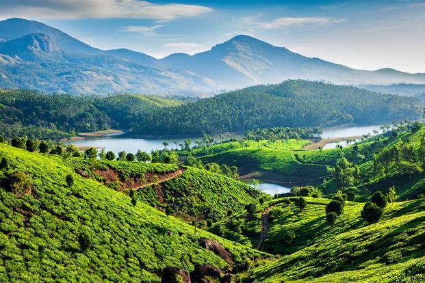 Picture of Tea Gardens in Kerala