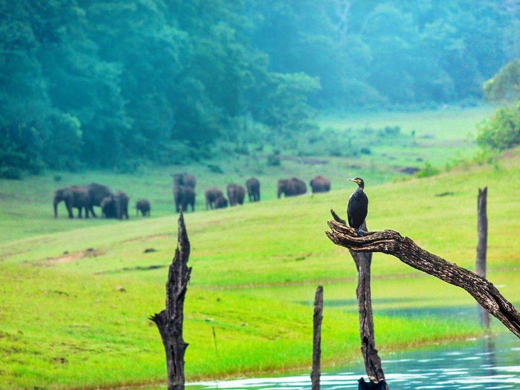 thekkady-wild-animals