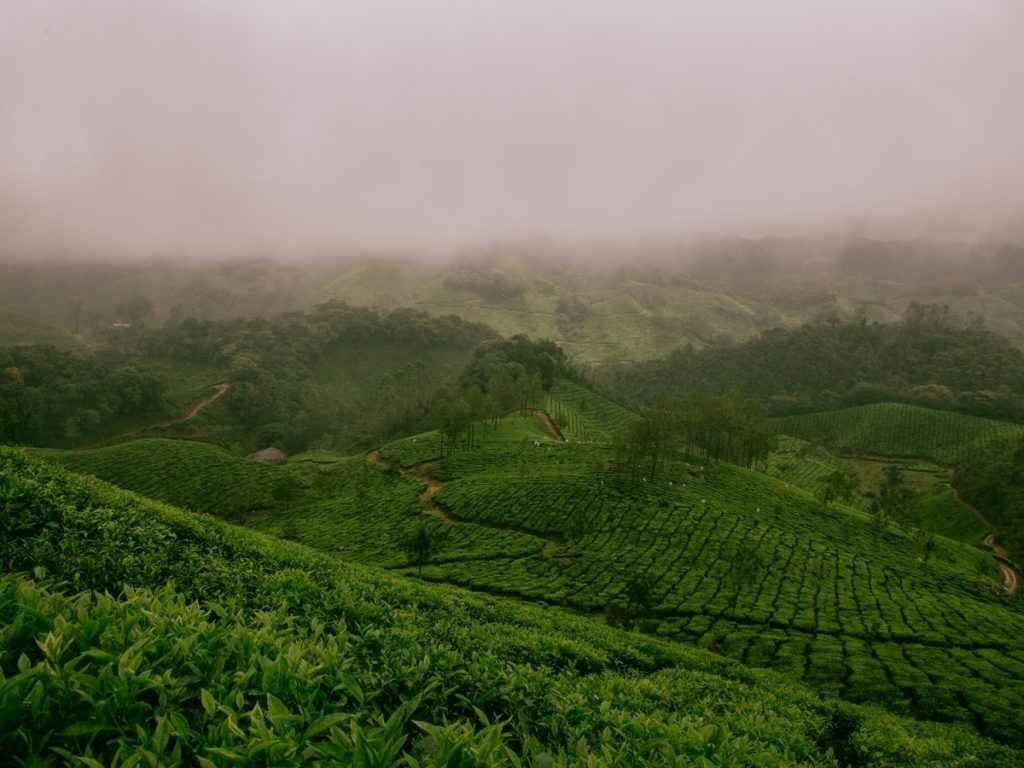 Best Places to visit in Kerala-Tea Gardens in Munnar