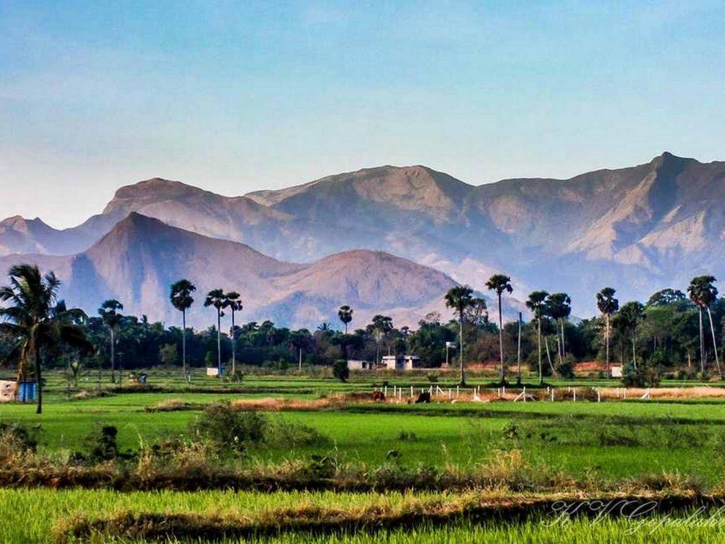 palakkad-paddy-fields-hills-kerala
