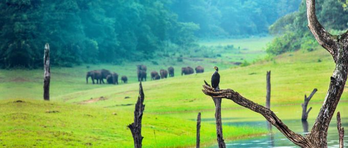 Best Things to do in Thekkady