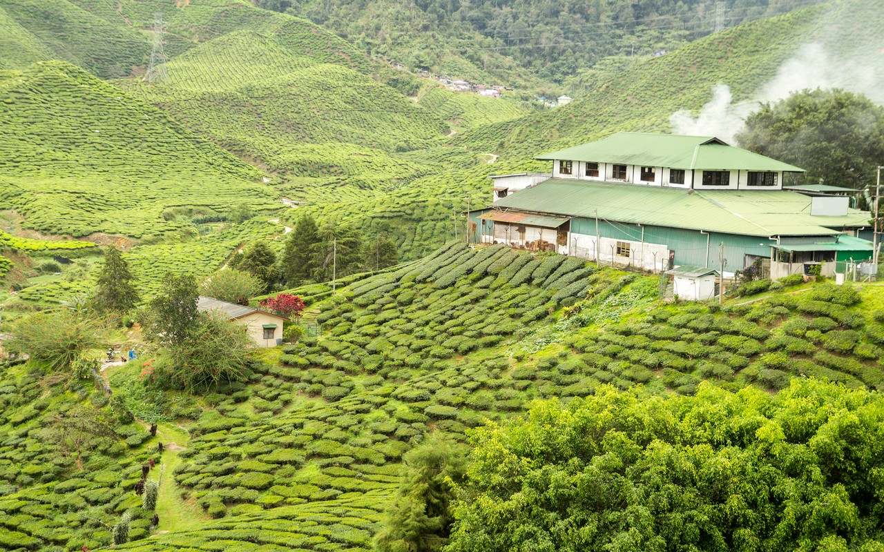 Best time to visit Munnar-Summer, Winter or Monsoon?