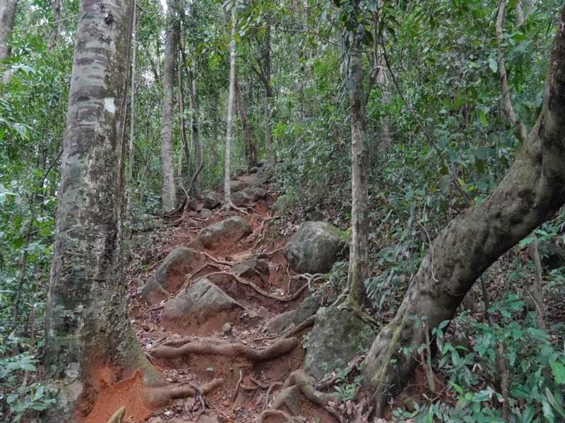 thusharagiri-waterfall-trekking