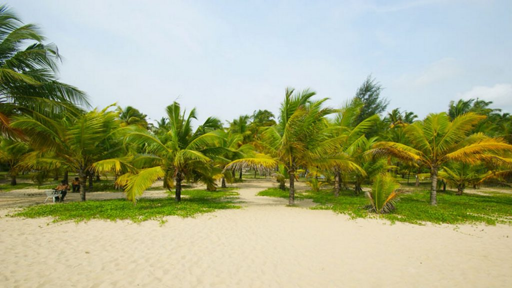 Marari Beach Coconut Palms