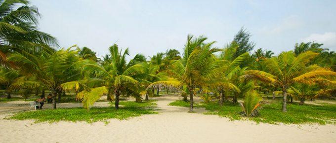 Marari Beach Coconut Palms