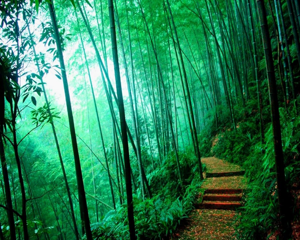 bamboo-forests-wayanad