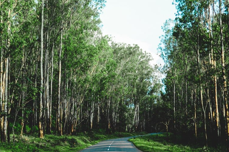 Kochi to Thekkady: Journey Attractions and Guide