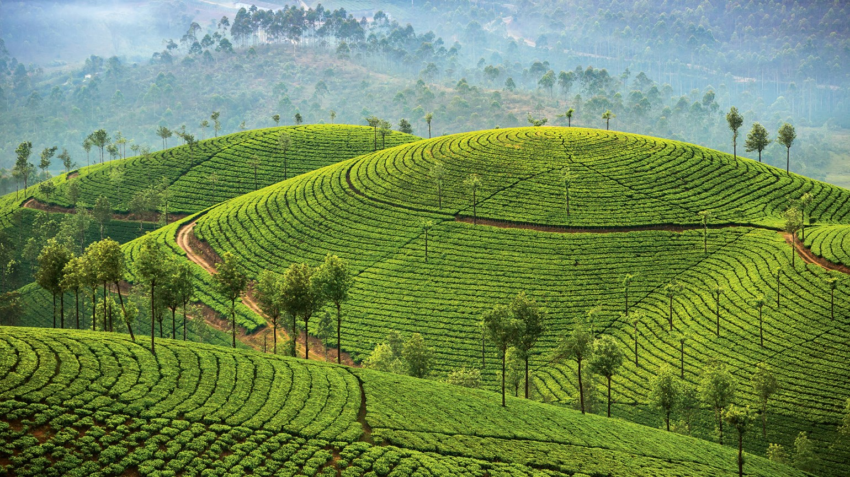 Highest Peaks in Kerala