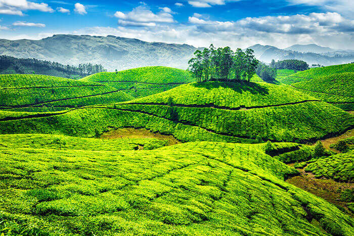 Top 16 Best Places to Visit in Munnar in 2022 (Map+Photos)